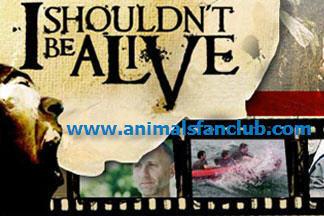 Shouldn't Alive (المجموعة الكاملة) 17466.imgcache